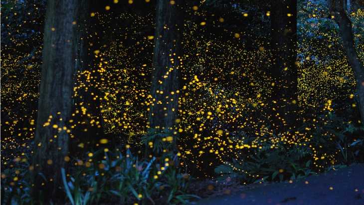 Luoghi surreali: Fireflies in a Forest Japan