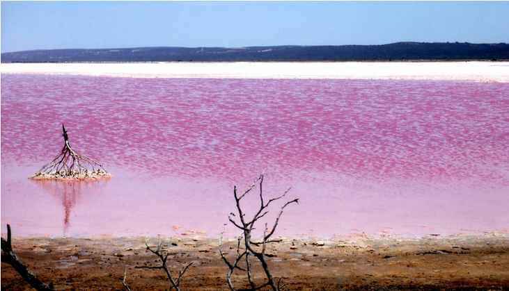 Luoghi surreali: Pink Lake Australia
