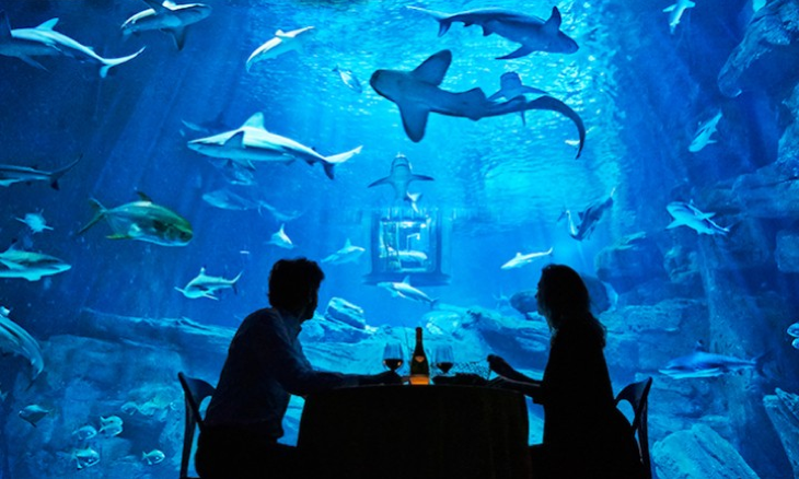Amazing photos of an Incredible place in Paris: sleeping in the middle of an aquarium with 35 Sharks