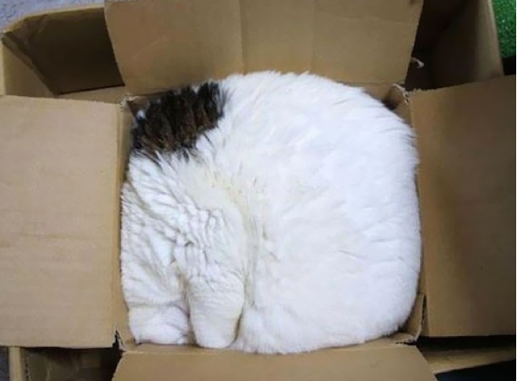 Amazing and funny pictures about cats that sleep