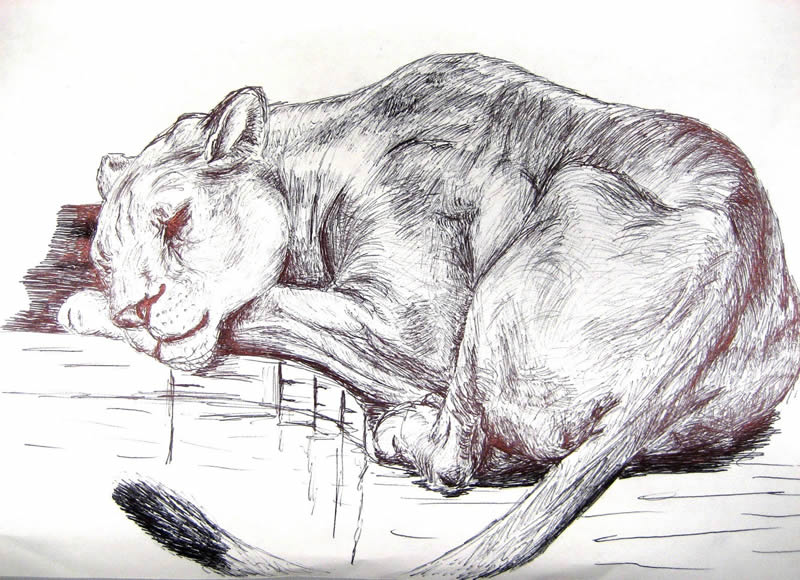 Disegno a china di animale